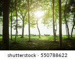Stock photo tree 550788622