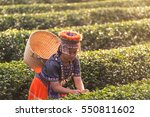 kid and green tea field in shui ... | Shutterstock . vector #550811602