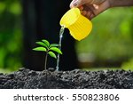 Young Plant Watered From A...