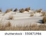 Small photo of Sand dunes at Assateague State Park, Berlin, Maryland. American beachgrass, Ammophila breviligulata, is seen in this arid habitat that is frequently disturbed by storms, wind and fire.