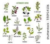 Astringent Herbs. Hand Drawn...