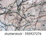 background  texture wall from... | Shutterstock . vector #550927276