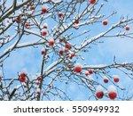 red rowan berries in the snow... | Shutterstock . vector #550949932