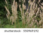 meadow | Shutterstock . vector #550969192