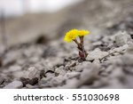 Yellow Flower In Nature. It...