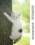 Stock photo white kitten with bright blue eyes trying to climb a tree 55106320