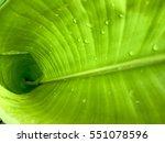 banana leaf background | Shutterstock . vector #551078596