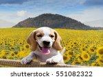 Beagle Dogs Beagle Dog Standin...