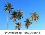 Coconut Palm Tree On Blue Sky...
