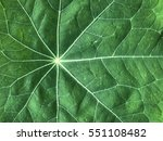 Green Leaf Detail Close Up  Ca...