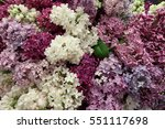 purple and white lilac flowers... | Shutterstock . vector #551117698