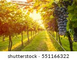 grape harvest  | Shutterstock . vector #551166322