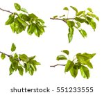 pear tree branch with leaves... | Shutterstock . vector #551233555