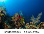 Beautiful Coral Landscapes Can...