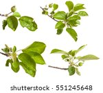 Apple Tree Branch With Unripe...