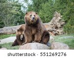 grizzly bears | Shutterstock . vector #551269276