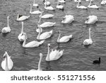 White Swans Swimming In Lake....