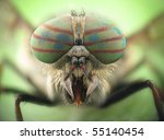 Hybomitra Horse Fly Head Closeup
