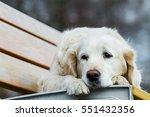 dog on seat  golden retriever.... | Shutterstock . vector #551432356