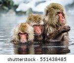 Group Of Japanese Macaques...