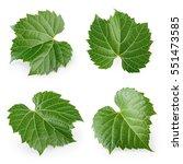 Fresh Raw Grape Leaves Isolated - Fine Art prints