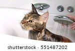 Cat Bath. Wet Cat.