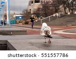 Seagull And Female Jogger In...