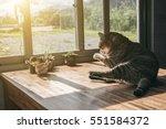 fat tabby cat sleep on the... | Shutterstock . vector #551584372