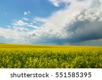 A Yellow Canola Field In...