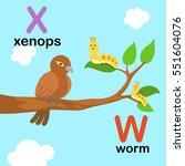 alphabet letter w worm x xenops ... | Shutterstock .eps vector #551604076