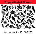 Collection Of Tropical Exotic...