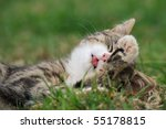 Stock photo petite little kitten playing on the grass cat s child 55178815