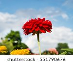 flower in the garden with clear ... | Shutterstock . vector #551790676