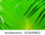 palm leaves background nature | Shutterstock . vector #551839852
