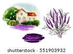 illustration of lavender.... | Shutterstock . vector #551903932