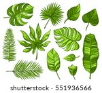 set of green tropical leaves on ... | Shutterstock .eps vector #551936566