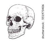 anatomic skull vector art.... | Shutterstock .eps vector #551973406