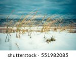 cold wind blowing reeds at snow ... | Shutterstock . vector #551982085