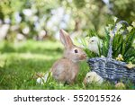 Cute Rabbit And Little Chicks