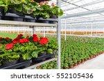 crates with dutch geranium... | Shutterstock . vector #552105436