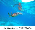 sea turtle in blue water. green ... | Shutterstock . vector #552177406