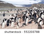 wild penguins resting by the... | Shutterstock . vector #552203788