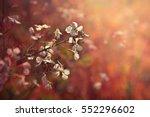 flowers in the garden  pink... | Shutterstock . vector #552296602