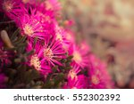 beautiful ice flowers field at... | Shutterstock . vector #552302392