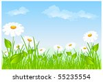 field of daisies and blue... | Shutterstock .eps vector #55235554