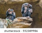 Black Chimpanzee Monkey Sittin...