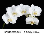 The Branch Of White Orchid On ...