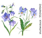 watercolor set with pansies and ... | Shutterstock . vector #552469042