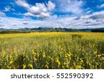 Field Of Blooming Spring Yello...