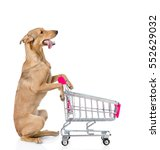 Dog With Shopping Trolley...